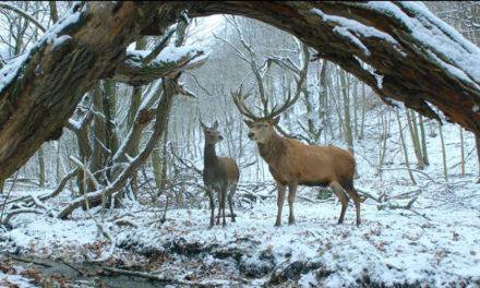 12 фильмов ММКФ можно будет увидеть в российском прокате